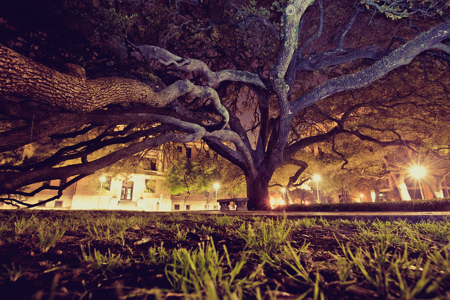 Century Oak - Texas A&M | Spring 2010 | College Station, TX